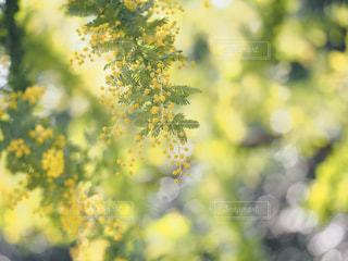 近くの花のアップの写真・画像素材[1854072]
