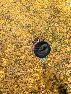 子ども,秋,森林,帽子,黄色,葉,子供,イチョウ,銀杏,遊び,ハット,1歳,yellow,いちょう,一歳,パパの帽子