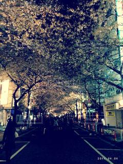 自然,桜,夜景,東京,アート,樹木,並木道,通り,都内,草木,さくら