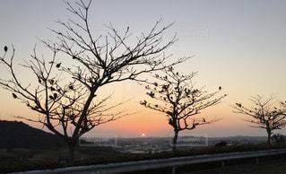 近くの木のアップの写真・画像素材[1870059]