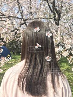 風景,春,桜,屋外,花見,少女,樹木,人
