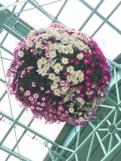 花玉の写真・画像素材[2037106]
