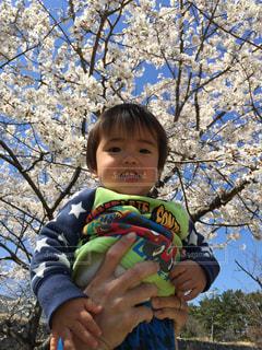 春,桜,青空,花見,初めて,Spring,春休み