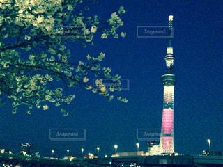 春,桜,夜景,ピンク,スカイツリー,花見,夜桜