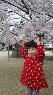 桜,お花見