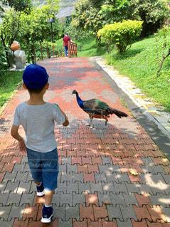 自然,鳥,屋外,青,散歩,子供,楽しい,樹木,人物,人,地面,マレーシア,少年,レジャー,男の子,若い,キジ,散策,バードパーク,KLバードパーク