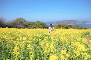 フィールドに黄色の花の人の写真・画像素材[1867034]
