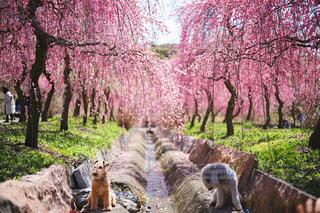 犬,自然,公園,春,動物,屋外,梅,散歩,草,樹木,ペット,お花見,いぬ,わんちゃん