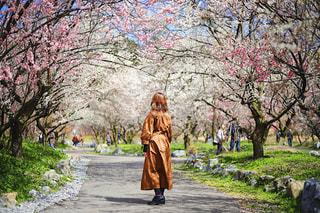 花,春,屋外,ピンク,梅,後ろ姿,お花見,人物,人,後姿