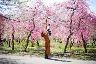 女性,子ども,家族,花,春,桜,屋外,花見,草,樹木,お花見,草木,桜の花,さくら