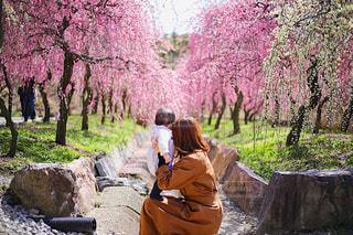 女性,子ども,風景,公園,花,春,桜,屋外,草,樹木,お花見,人