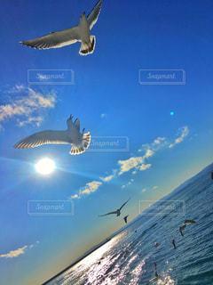 空を飛んでいるカモメの群れの写真・画像素材[1868324]