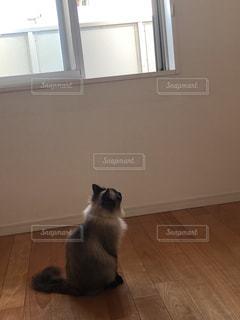 窓の前にたたずむ猫の写真・画像素材[1871372]