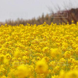 近くの花のアップの写真・画像素材[1863375]