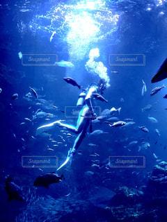 水族館のダイバーの写真・画像素材[3258539]