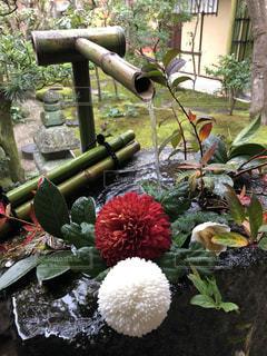 手水鉢の花の写真・画像素材[1916125]