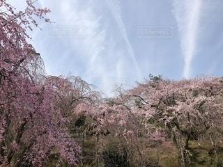 空の写真・画像素材[1988865]