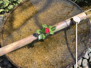 手水鉢の一輪のツバキの写真・画像素材[1992090]