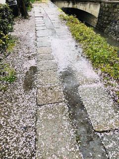 桜散る小道の写真・画像素材[2007151]