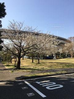 桜とループの写真・画像素材[1872539]