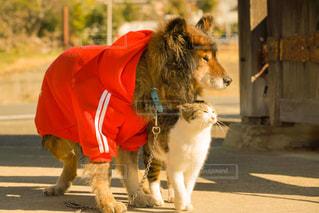 犬,猫,動物,屋外,オレンジ,ペット,人物,ネコ