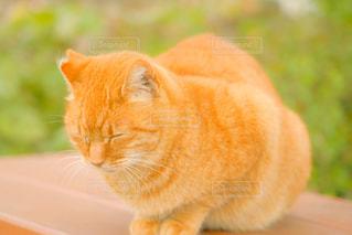 猫,動物,オレンジ,草,ペット,人物,座る,ネコ