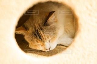 猫,動物,かわいい,景色,鮮やか,オレンジ,ペット,寝る,子猫,人物,キティ,ネコ,ネコ科の動物