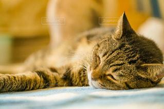 猫,動物,屋内,景色,ペット,子猫,人物,ストライプ,キティ,ネコ