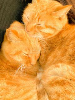 眠っている猫のクローズアップの写真・画像素材[4015585]