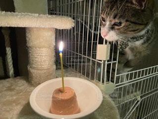猫,屋内,きれい,キャンドル,誕生日