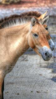 動物,きれい,茶色,景色,馬,たてがみ,栗色,種牡馬