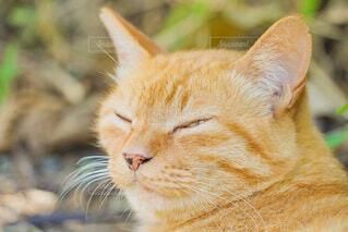 猫,動物,景色,オレンジ,哺乳類,ネコ科