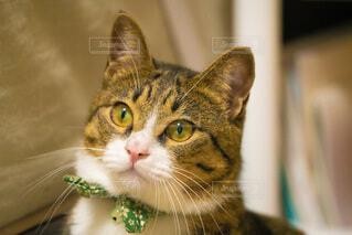 猫,動物,屋内,きれい,景色,子猫,癒し,目,ネコ科
