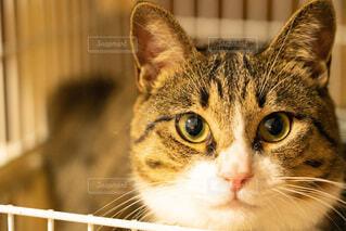 猫,動物,屋内,きれい,景色,子猫,癒し,座る,目,ネコ科