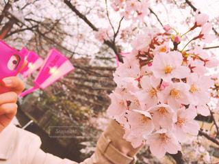 ピンクの花を持っている手の写真・画像素材[1868406]