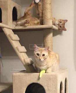 カメラのポーズをとる鏡の前に座っている猫の写真・画像素材[2321242]