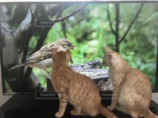 窓の前に立っている猫の写真・画像素材[2321401]