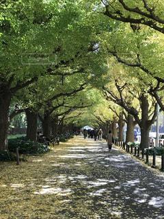 公園の大きな木の写真・画像素材[868676]