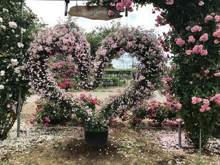 花,庭,ピンク,バラ,薔薇,ハート,パステル,花園,マーク,ばら,ガーデン,バラガーデン