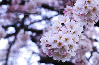 近くの花のアップの写真・画像素材[1875470]