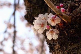 近くの花のアップの写真・画像素材[1875476]