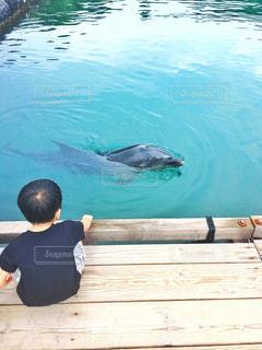 自然,海,イルカ,後ろ姿,水色,背中,休日,男の子,ドルフィンパークしまなみ