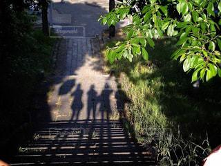 夏,屋外,緑,階段,晴れ,影,新緑,休日,友達,お散歩,仲間,お出かけ