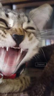 猫の怒りクローズアップの写真・画像素材[2291832]