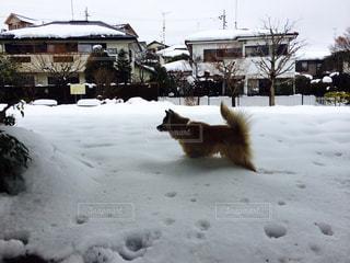 犬,公園,冬,動物,雪,白,深雪,初雪