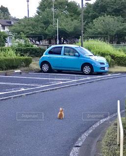 車,茶色,道路,水色,ねこ,ベージュ,ミルクティー色