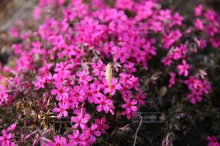 春の訪れの写真・画像素材[2016958]
