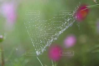水滴の写真・画像素材[2107178]
