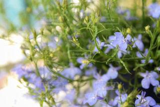 花,緑,水,紫,水滴,ガーデニング,水玉,雫,しずく,ドロップ,水やり,フローラ,朝のルーティーン