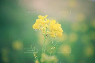 雨の日の写真・画像素材[2165324]
